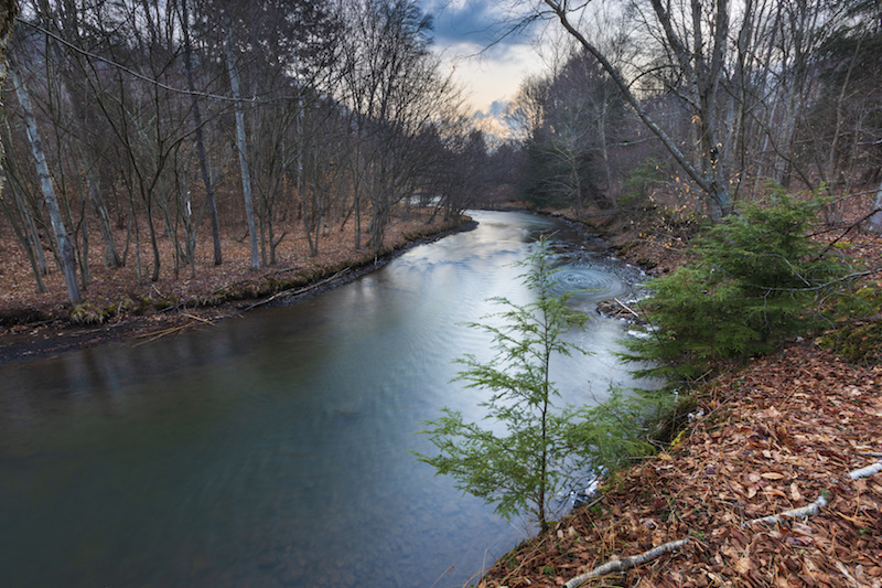 11 4 Clarion Junction Forest c EcoPhotography201904101