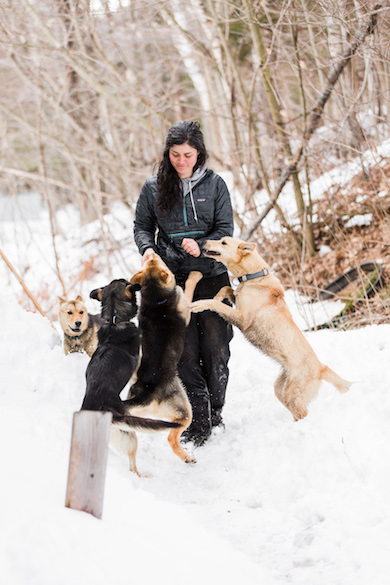 Sally Manikian with a few of her Shady Pines Sled Dogs