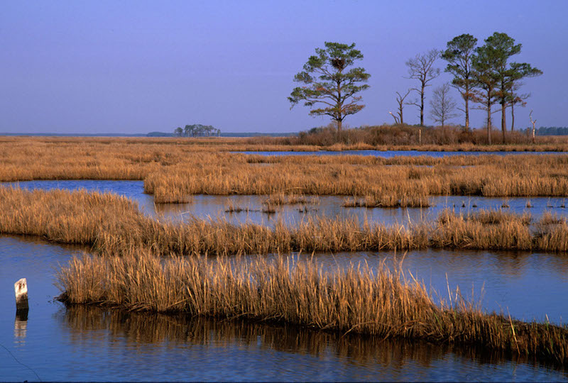 2 20 blackwater marsh