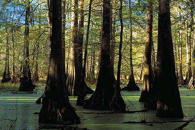 Forestland Added to Catahoula Wildlife Refuge in Louisiana
