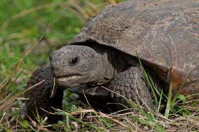 Protection of Tortoise Habitat Provides Assurances to Farming and Forest Industries