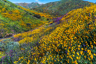 Flower Power Enables Growth in Southern California