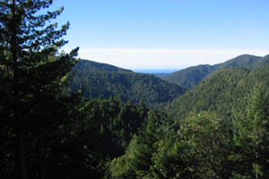 In 2004, Chris Kelly led our purchase of the Garcia River Forest, a nearly 24,000-acre expanse of redwood and Douglas fir. With this purchase, we created California's first large nonprofit-owned working forest. Photo by Chris Kelly/The Conservation Fund.