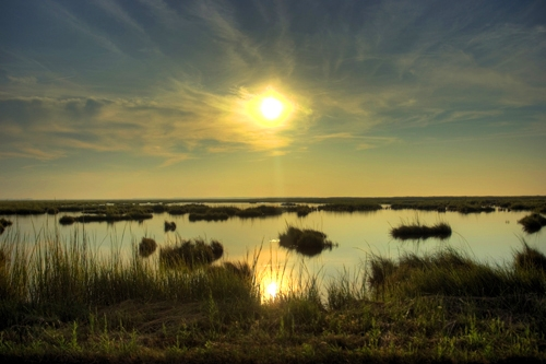 Blackwater marsh sunrise copyright Nikographer 500x333