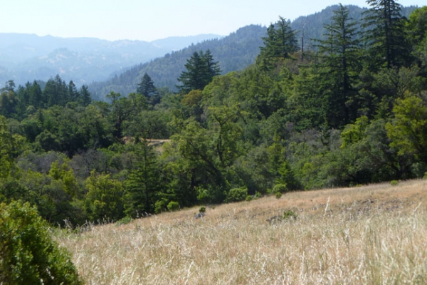 CA Buckeye Ridge Preservation Ranch forest 645x430