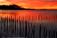 wallpaper Blackwater NWR sunrise nikographer 1600 600x450