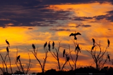 wallpaper kanapaha prairie birds mac stone 16001 600x450