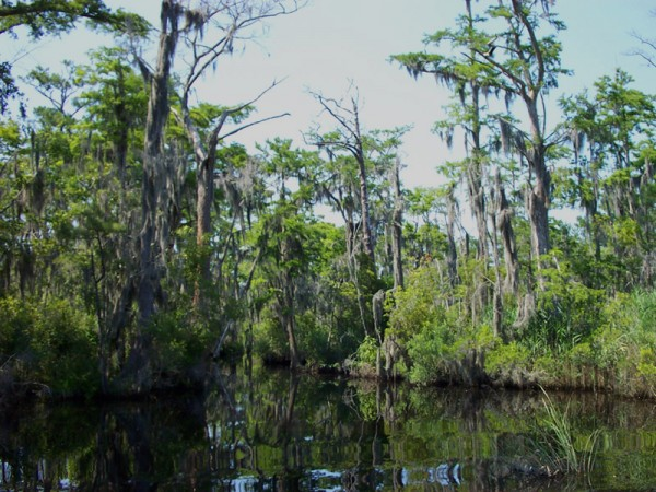 TCF Palmetto Peartree Preserve HiddenLake 800x600 600x450