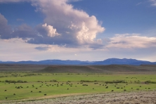 WY Budd Ranches cattle grazing Mark Gocke 2010 05 645x430