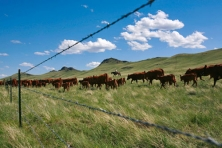rocky mountain front cattle Todd Kaplan