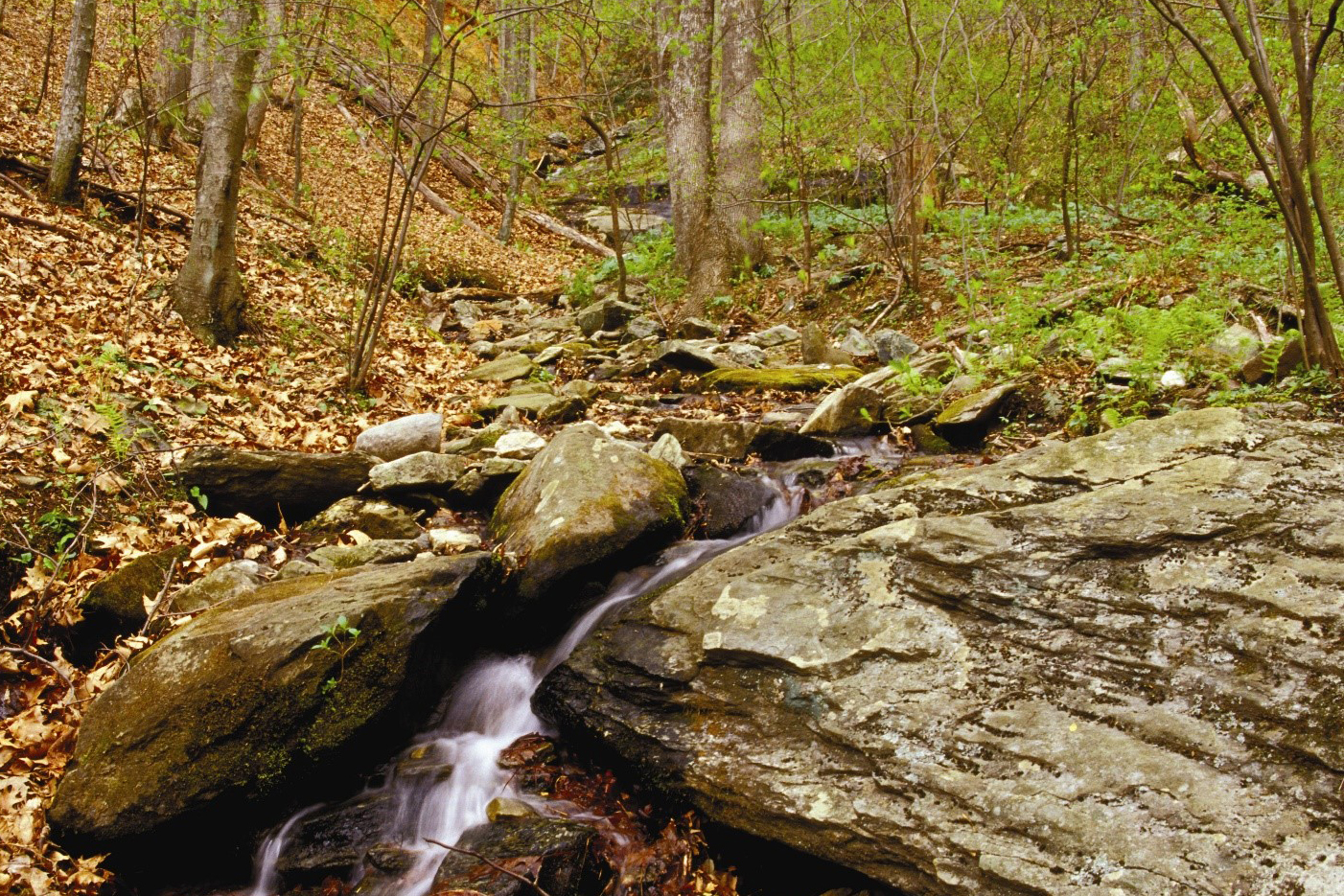 First Order Tributary on the Wellspring Mountain property. Photo courtesy of Piedmont Land Conservancy.