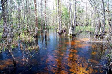 Lower Suwannee River basin.