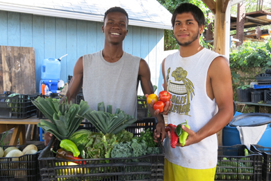Transporting Healthy Food Grant Applications Now Open