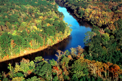 Forestland along the Neches River. Photo by Jay Brittain.
