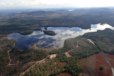 Partnership to Protect Maine Coastal Forests Launches