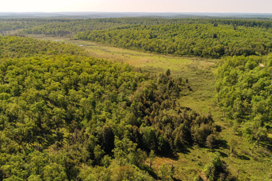 32,000 Acres Of Pennsylvania Forestland Acquired