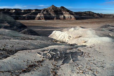 View from newly protected lands at Petrified Forest National Park. Photo by NPS.