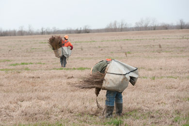 Tree planting at Red River NWR. Photo by Neil Johnson