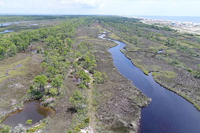 Gulf Coast Oil Spill Restoration Funding Supports Bon Secour National Wildlife Refuge