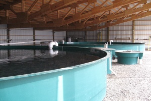 Fish Hatchery Water Reuse Evaluation – Chelan County, WA