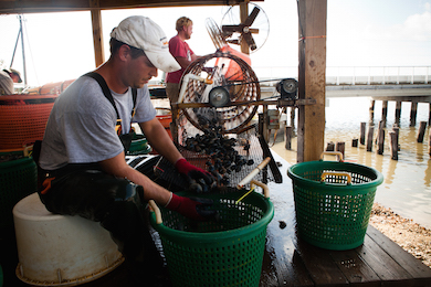 Clamming Operation 390x260