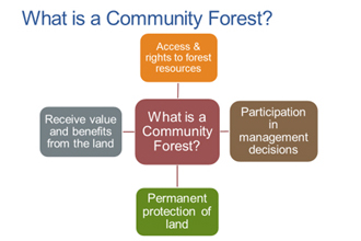 Community Forest Graphic