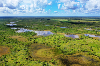 Conserving the Loxa-Lucie Headwaters—a Mosaic of Florida's Critical Wetlands