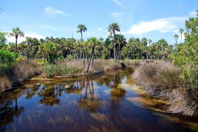 Safeguarding Forestland Along the Suwannee River