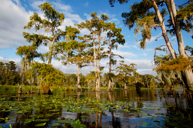 Maurepas Swamp Wildlife Management Area