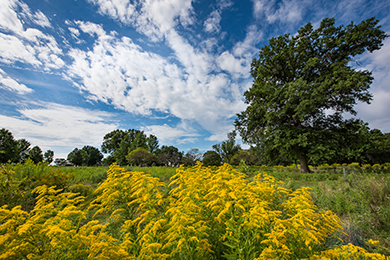 Expanding Green Space and Improving Social Resilience in South Cook County, IL.