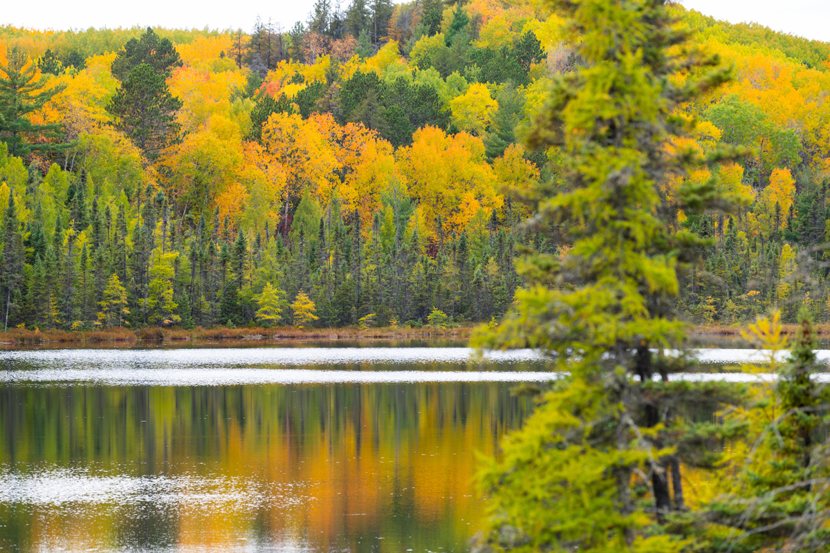72,440 Acres Of Working Forests Purchased In Minnesota