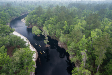 Suwannee River. Photo credit: Genevieve Dimmitt