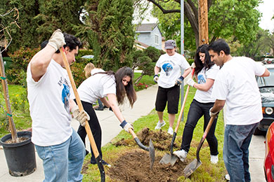TreePeople in action: A group of volunteers plants a tree along a street in Los Angeles County. Photo courtesy TreePeople.