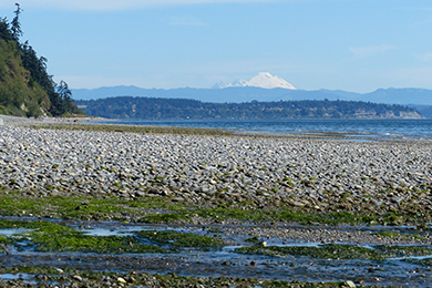 Whidbey-Camano Land Trust