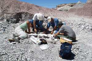 Paleo dig at Petrified Forest National Park, Arizona. Photo courtesy National Park Service.