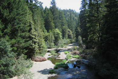 Big River And Salmon Creek Forests