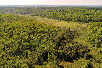 Conservation Invigorates Forest-Based Economies in Pennsylvania