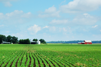 Farmland in Indiana. Photo by iStockphoto.com