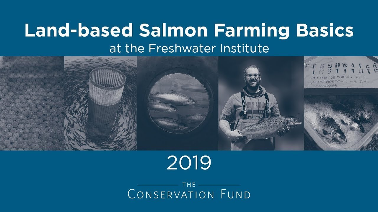 land based fish farming basics