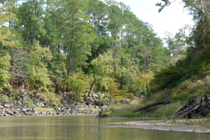 Middle Neches Forestland