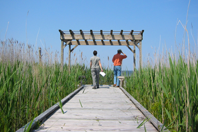 Boardwalk at the preserve. Photo by The Conservation Fund