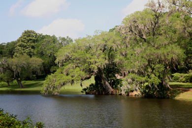 Ashley River Historic District / Middleton Place Woodlands