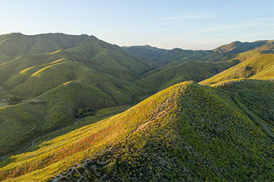 Protecting the Poppies of Walker Canyon, Lake Elsinore, California