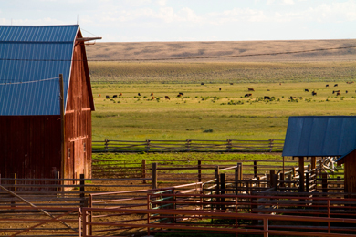 budd ranches inc the conservation fund