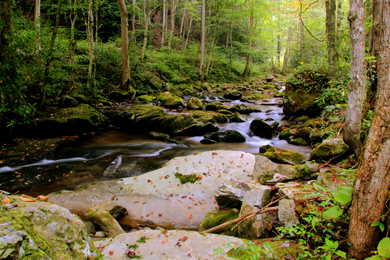 Rocky Fork, Tennessee—completely protected for generations to enjoy